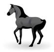 cheval pursan arabe
