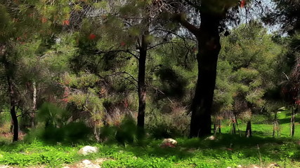 Stock Video Footage drive-by of forest trees in Israel.