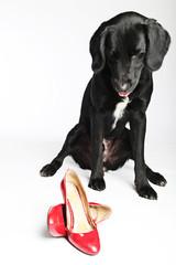Labrador mit roten Pumps