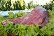Coxão duro - Carne