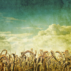 old wheat field photo