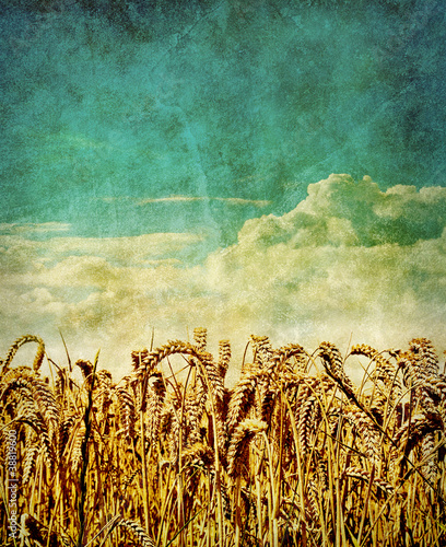 retro wheat field