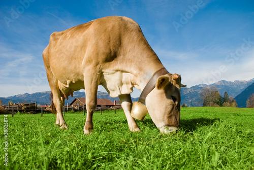 Aluminium Cow in Alps