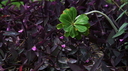Stock Video Footage closeup of green and purple leaves shot in Israel at 4k with Red.