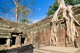 Banyan trees on ruins in Ta Prohm temple