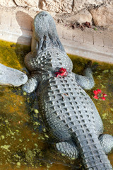 Cute crocodile with flower