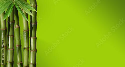 mlody-zielony-bambus-w-tle-boke