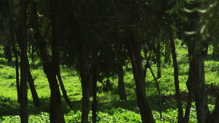 Stock Video Footage panorama of a forest shot in Israel at 4k with Red.