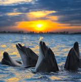 Fototapete Delphine - Wasser - Meeressäuger