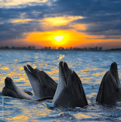 Foto op Canvas Dolfijn dolphins
