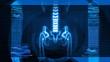 X-Ray of Human Skeleton (HD)