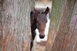 Small foal