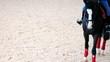 horse hoof walking on the sand