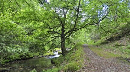 Paseo primaveral por el bosque de Muniellos.