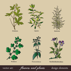 vector set: flowers and plants