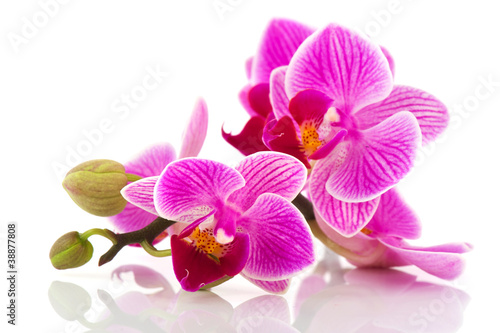 Papiers peints Orchidée Tropical pink orchid