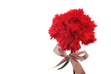 Red Carnation and golden bow isolated on white background