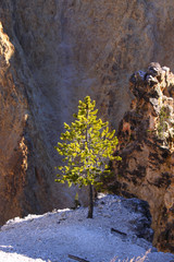 Single green pine tree in the middle of rocks