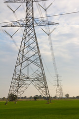 Power transmission line located on the rice fields