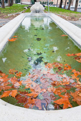autumn sycamore leafs in pool