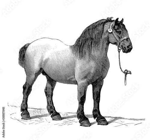Workhorse - Cheval de Trait