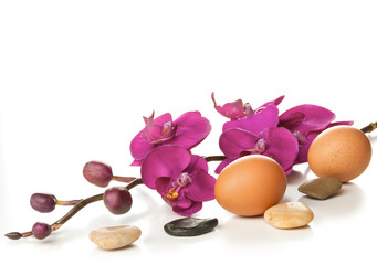 Easter eggs with orchid on white background