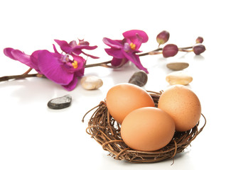 Easter eggs in nest with orchid on white background