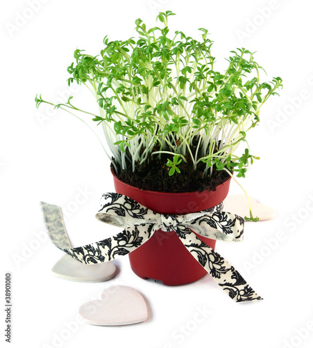 Pot with cress