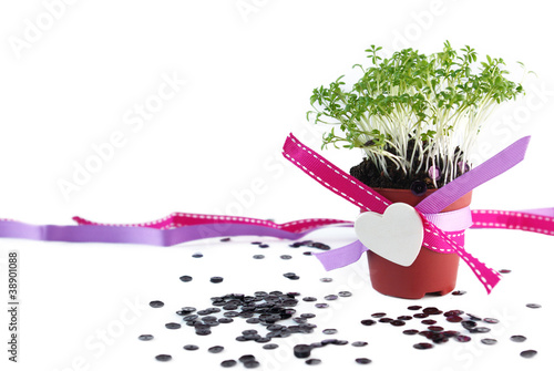 Decorated pot with cress