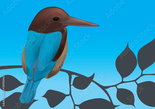 Kingfisher Bird Vector Illustration