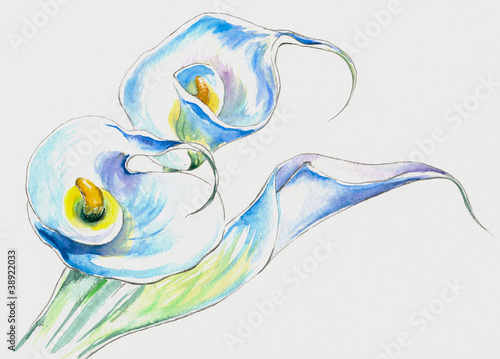 White calla