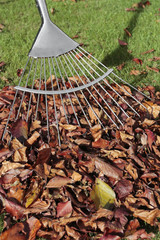 Rake and autumn leaves heap on grass lawn