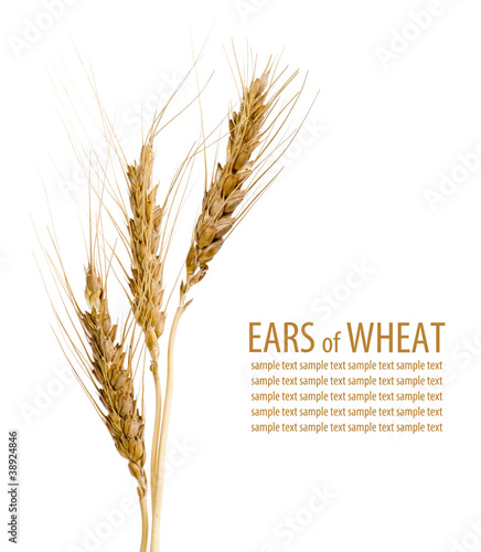 Ears of wheat on isolated white background - 38924846