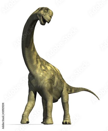 Camarasaurus Dinosaur 2