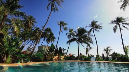 Swimming pool and palms loop