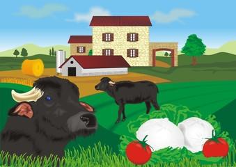 fattoria campana - mozzarella