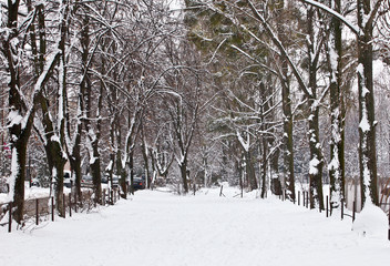 Park in winter with snow and fog