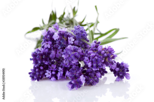 Bunch of picked lavender