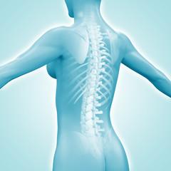 Weiblicher Rücken mit Wirbelsäule