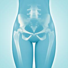 Hüfte - Anatomie - 3D Grafik