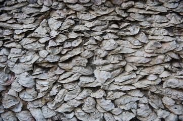 seashell wall close up
