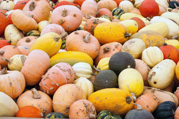 A variety of gourds and pumpkins filling the screen