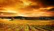 canvas print picture Stunning Vineyard