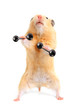 Hamster with bar