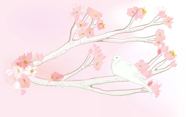 cherry blossom branch and white dove