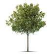 Isolated tree.