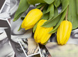yellow tulips lying on black and white photographs