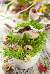 birds and eggs on the  cress
