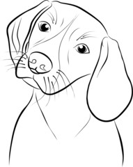 Beagle puppy in front of white background  - freehand