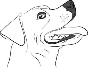 hunting dog isolated on white background - freehand